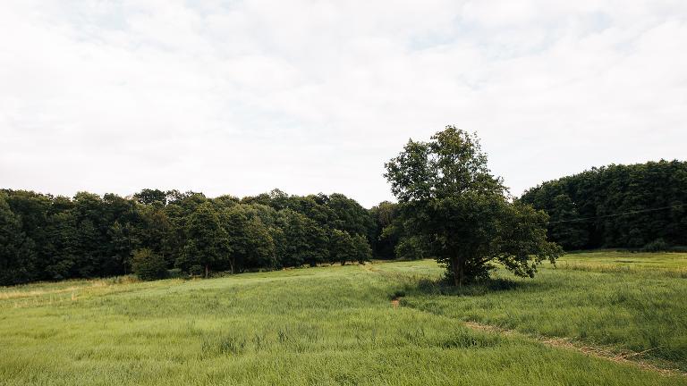 wilder Waldrand Auenlandschaft alte Eiche und Wiese