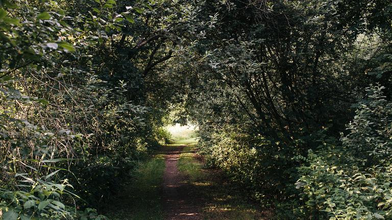 überwachsener Weg Waldrand Pflanzentunnel romantisch